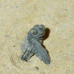 沖縄 恩納村仲泊海岸 ウミガメの産卵 産卵環境の保護