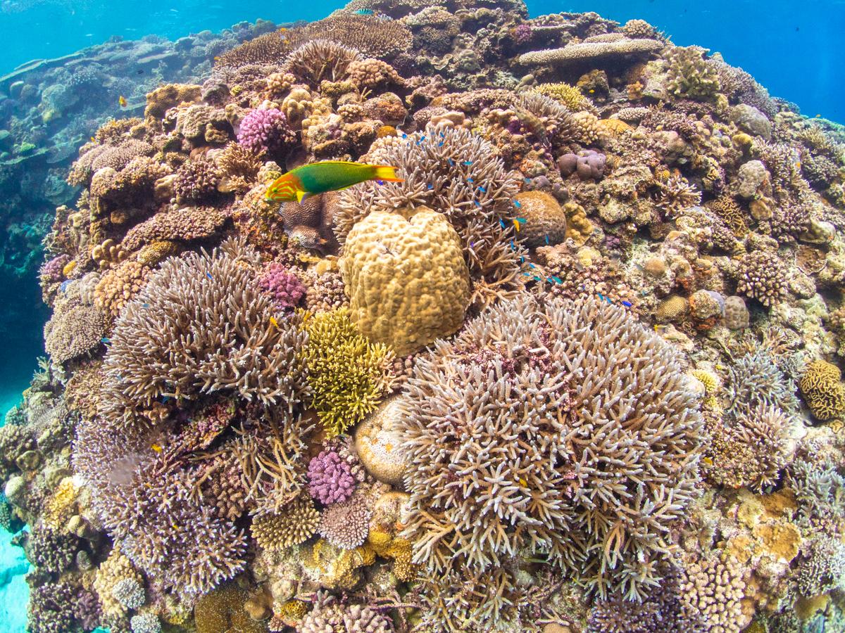 沖縄 サンゴの保護